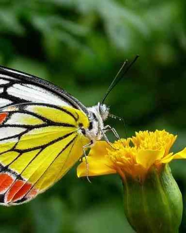 freedom-of-butterfly
