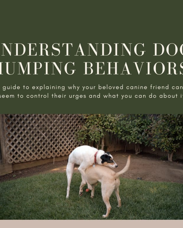 understanding-dog-humping-behaviors