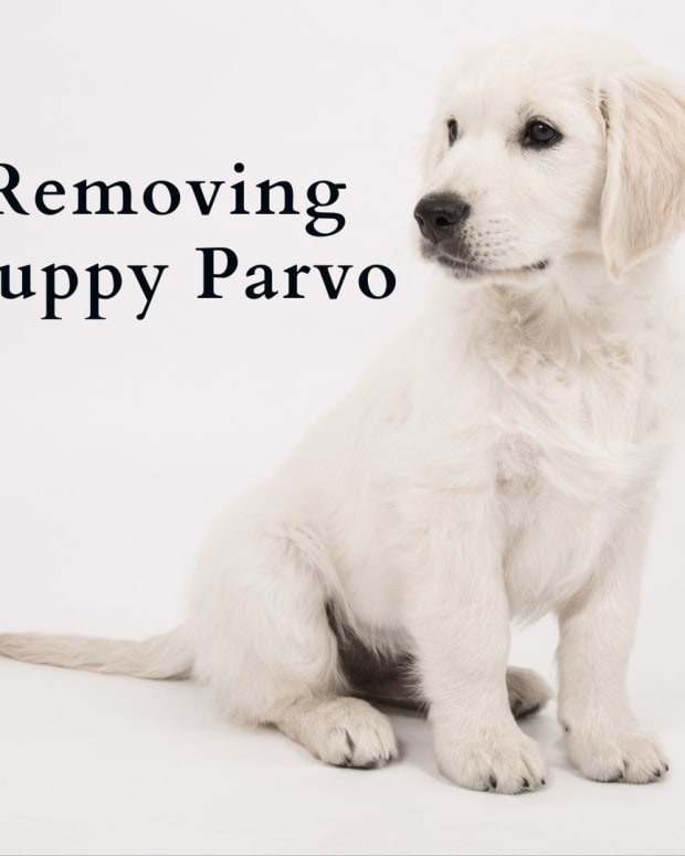 how-long-does-dog-parvo-last-in-your-home-or-yard