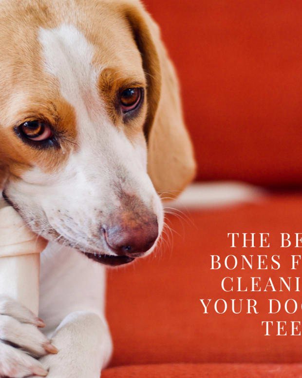 the-best-bones-for-cleaning-dogs-teeth