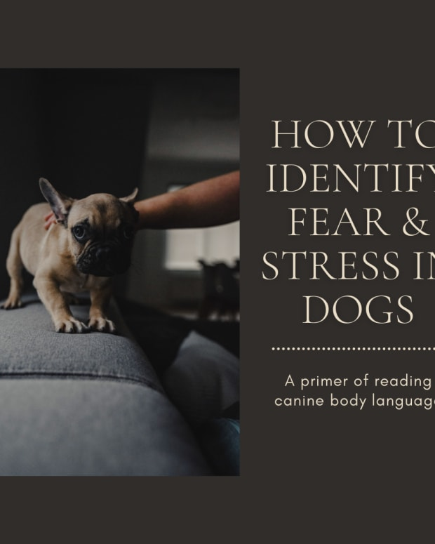 dog-behavior-the-body-language-of-stress-and-fear