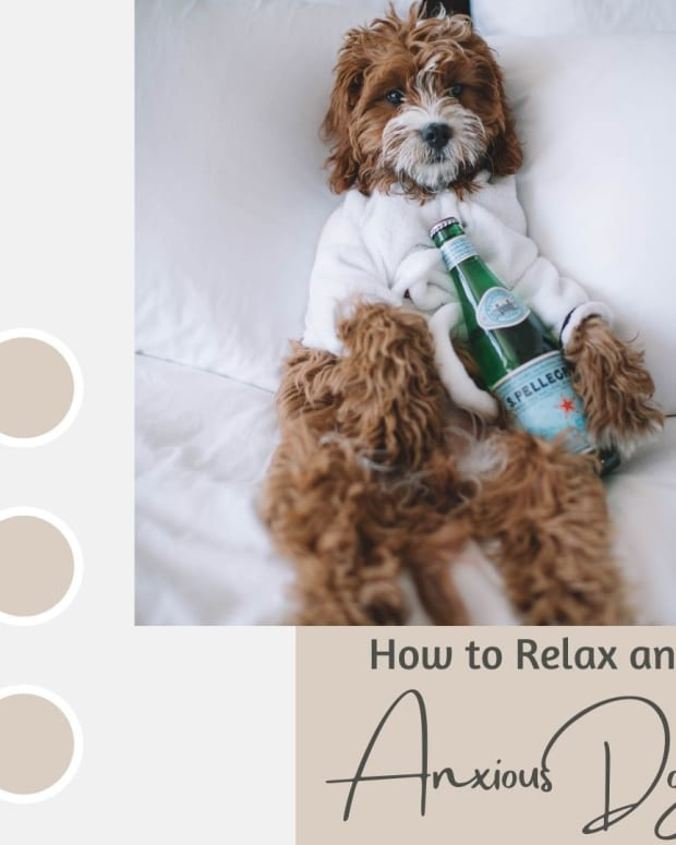 how-to-relax-anxious-dogs