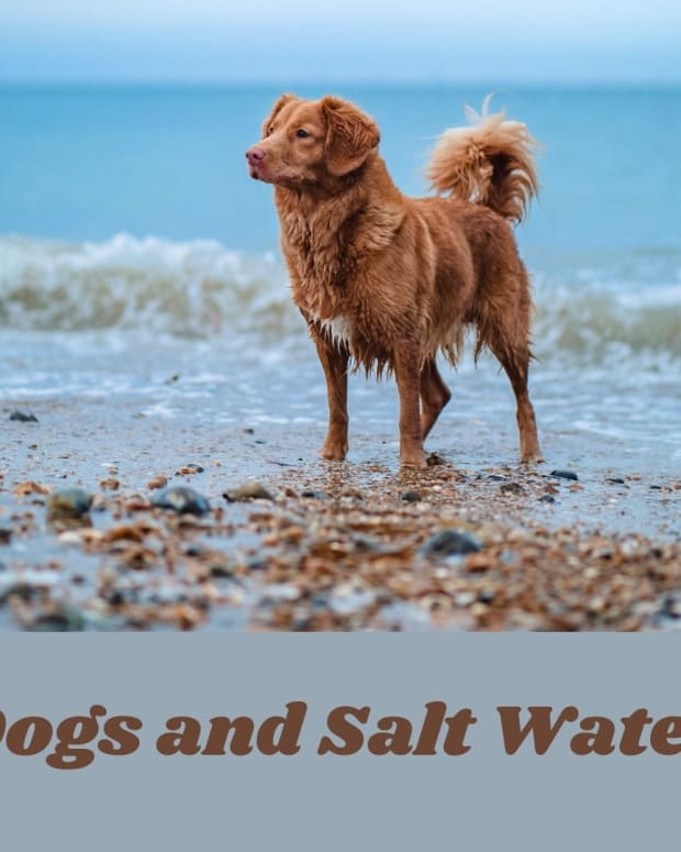 the-effects-of-salt-water-on-dogs