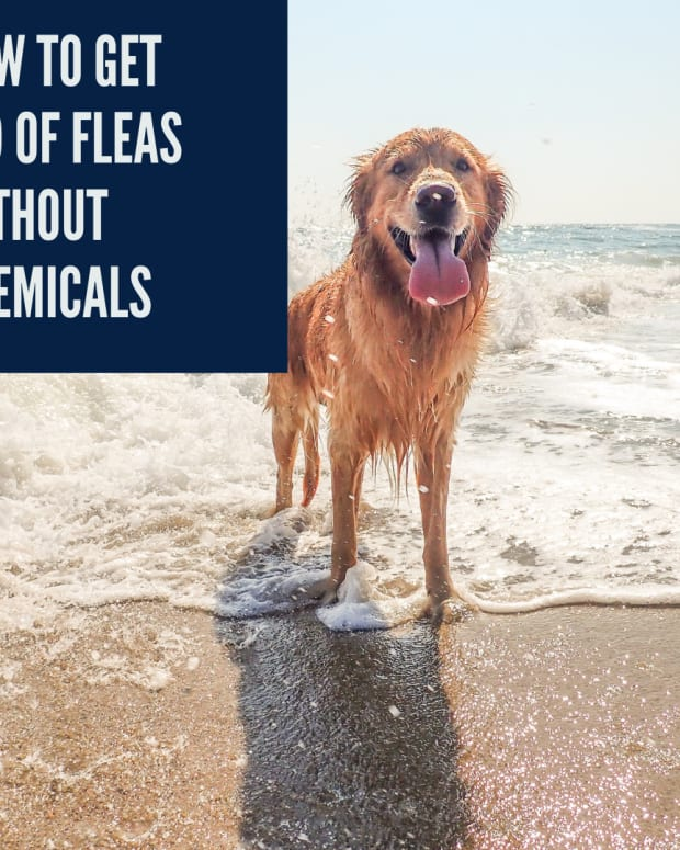 can-i-control-fleas-without-chemicals