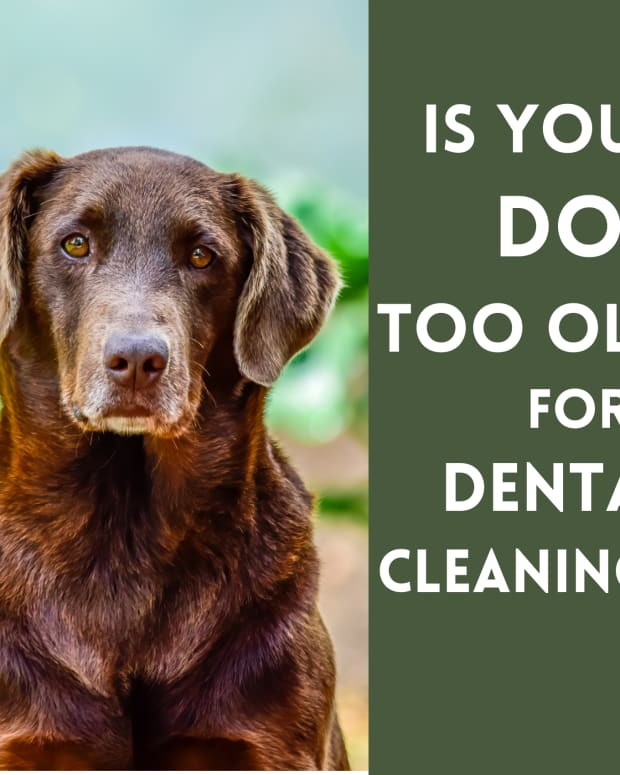 is-my-dog-too-old-for-a-dental-cleaning