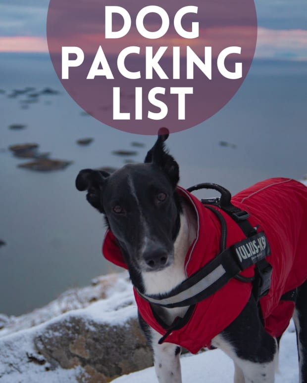 gear-and-tips-for-dog-hiking-and-camping