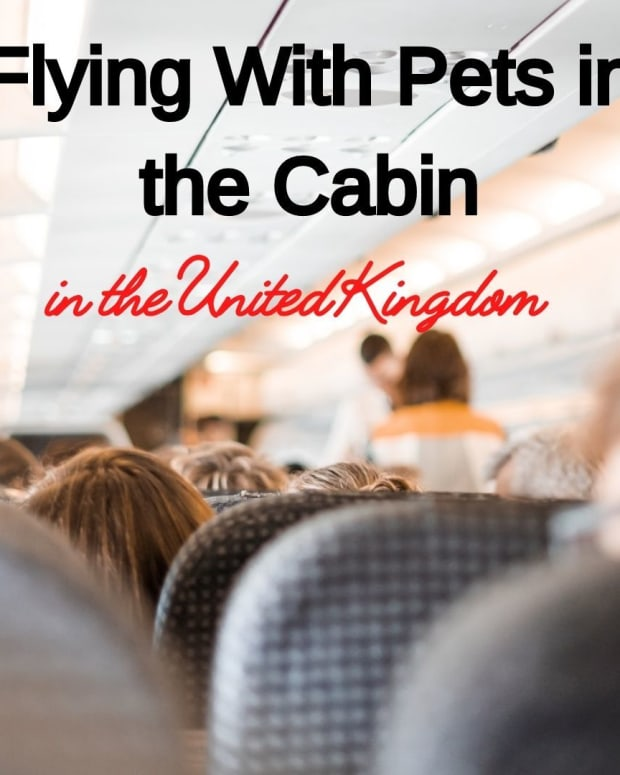 flying-with-pets-in-cabin-to-uk