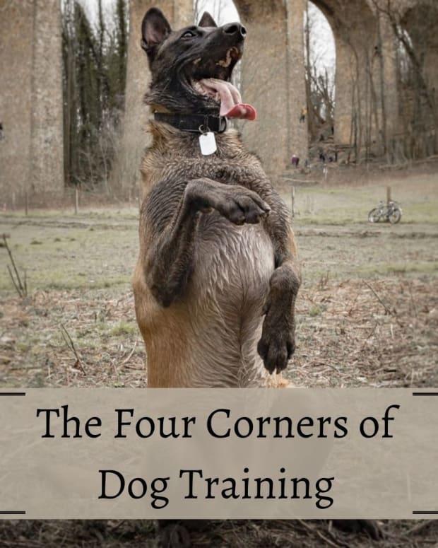 the-four-quadrants-of-dog-training