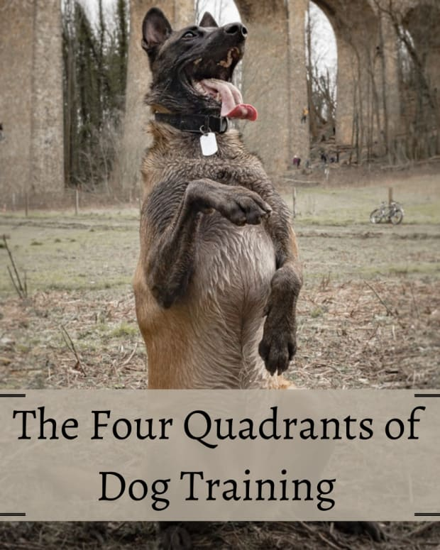 the-four-quadrants-of-dog-training