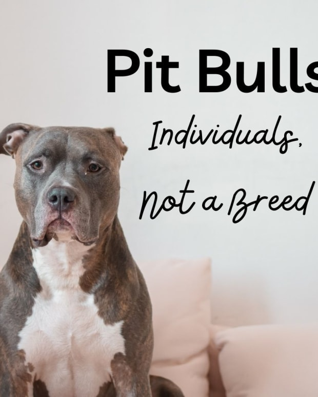 pit-bulls-are-individuals-and-not-a-breed