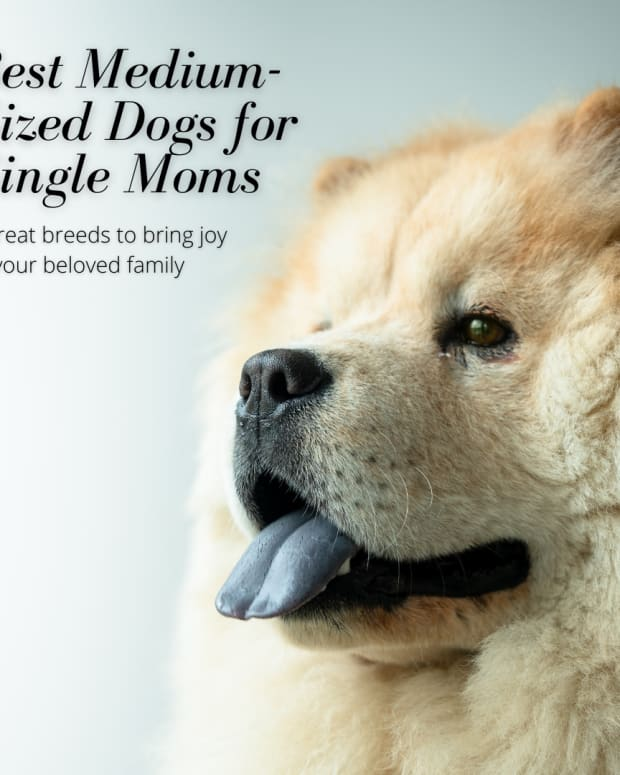 medium-sized-dogs-for-single-moms