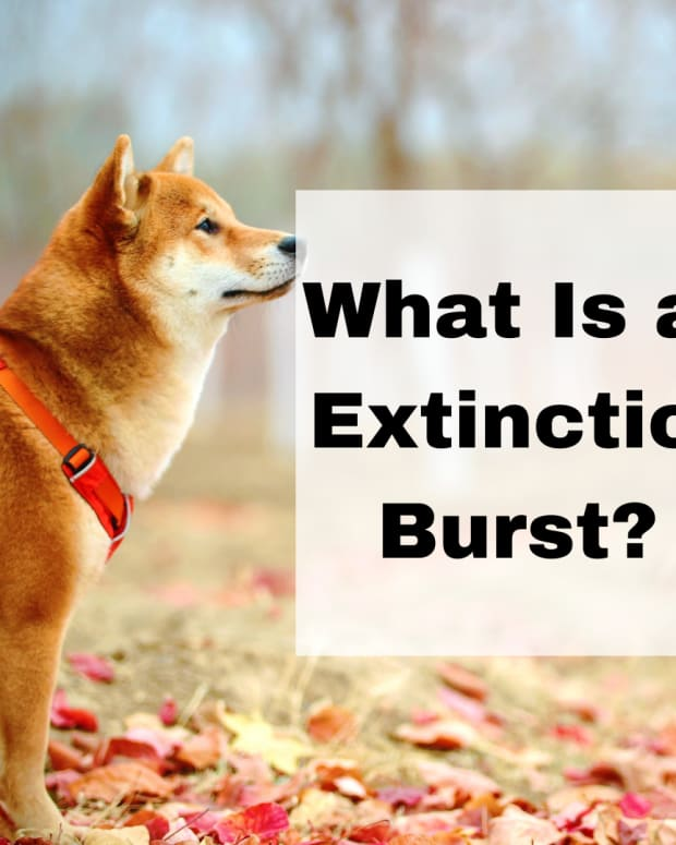 -dog-behavior-understanding-extinction-bursts