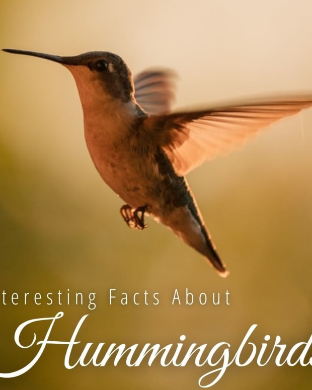 attracting-hummingbirds-with-native-plants