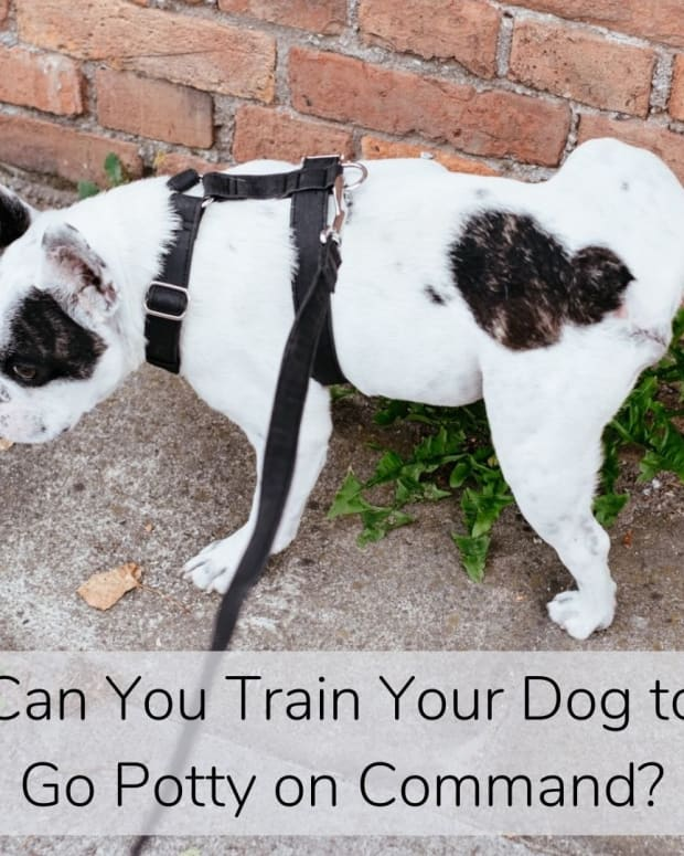 how-to-train-a-dog-to-go-potty-on-command