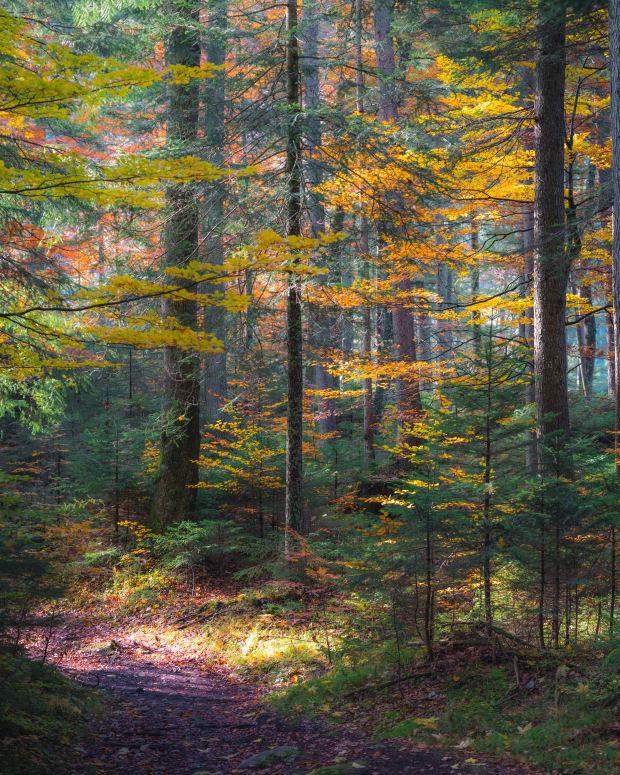 my-woodland-walk