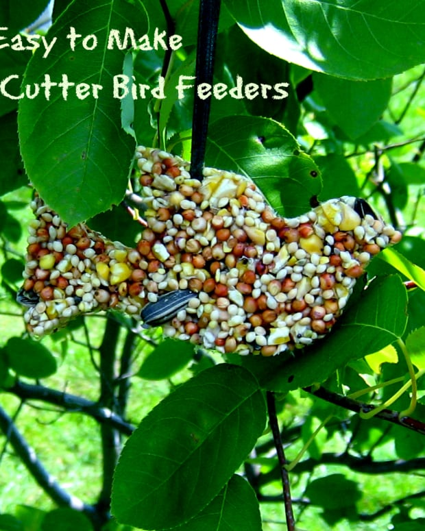 easy-crafts-for-kids-homemade-cookie-cutter-birdfeeder
