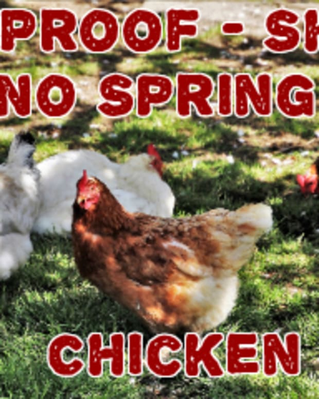 poem-100-proof-shes-no-spring-chicken