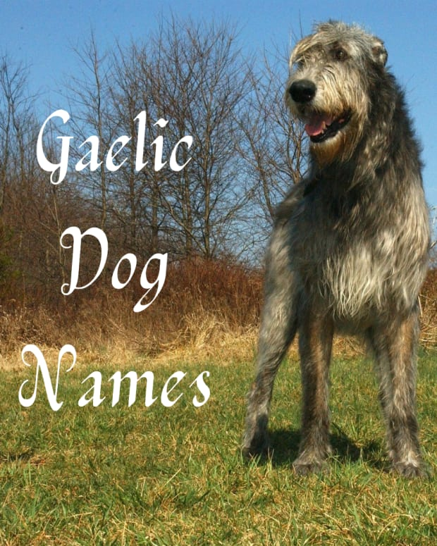great-gaelic-dog-names-for-an-irish-wolfhound