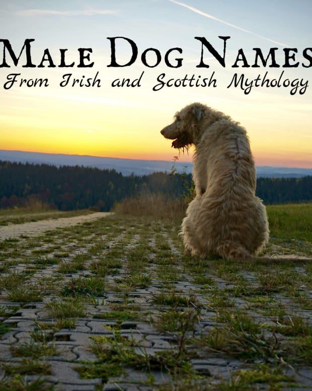 strong-dog-names-13-irish-and-scottish-names-for-male-dogs-from-myths-and-legends