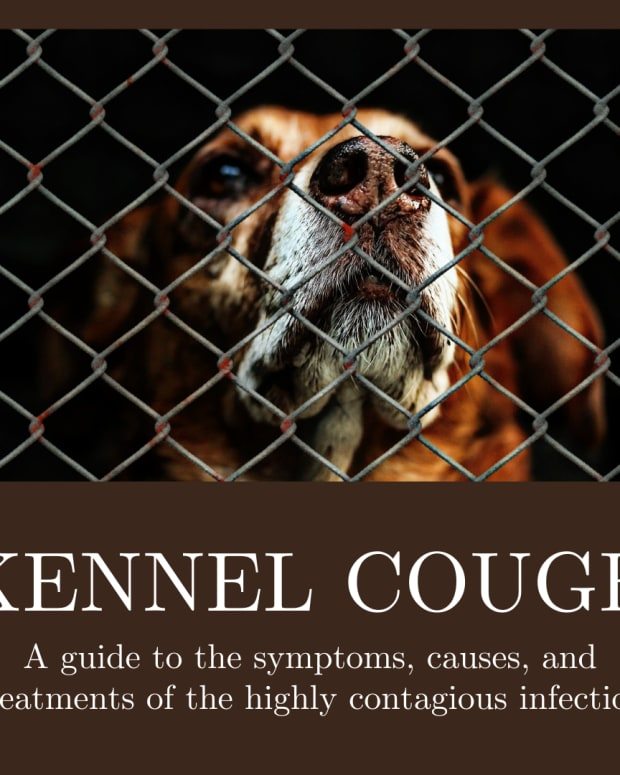 dog-kennel-cough--causes--symptoms-and-home-remedies