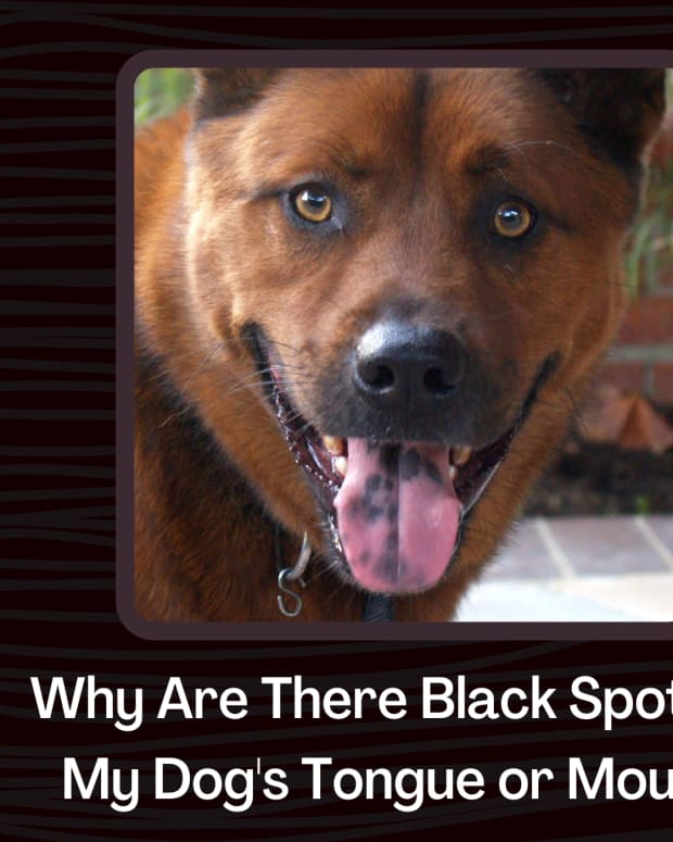 dogs-with-black-in-their-mouth