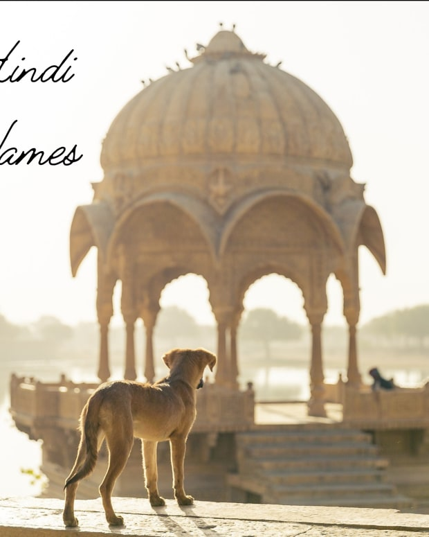 dog-names-from-india