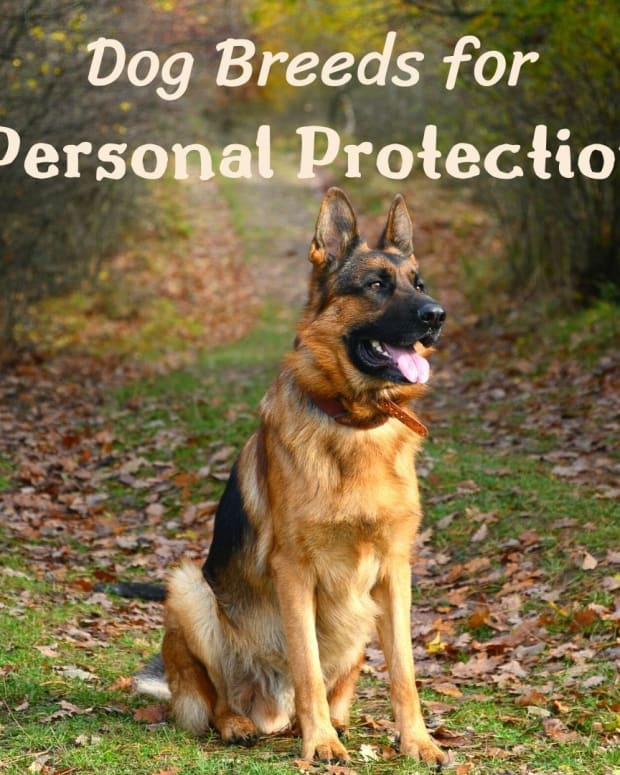 five-best-personal-protection-dog-breeds