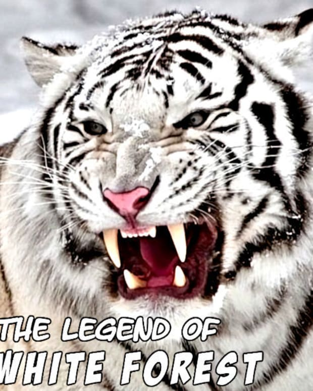 the-legend-of-white-forest-15