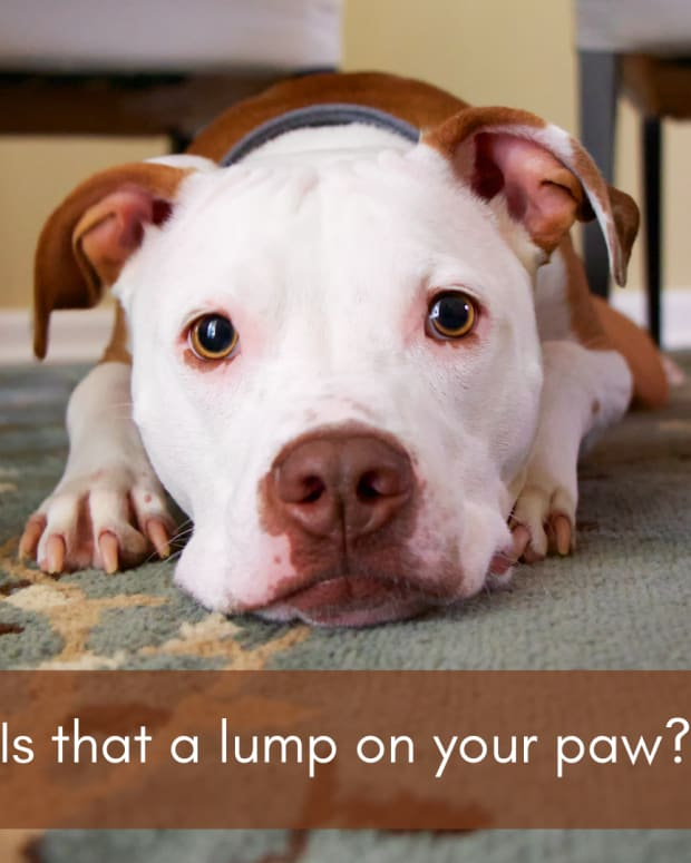 causes-of-lumps-on-dog-paw-pads