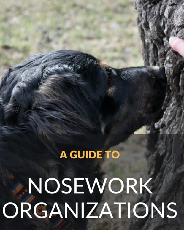 governing-bodies-of-k9-nosework-and-the-different-elements