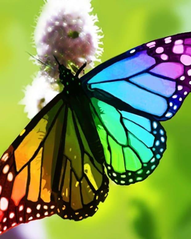 shimmering-wings