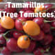 Colored tamarillos. I prefer to eat the yellow variety because they are milder in taste and sweeter.