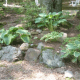 growing-and-dividing-hosta-plants