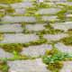Moss planted between concrete blocks.