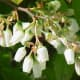 The often underrated, bell-shaped blueberry flowers are delicate, yet beautiful!