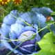 Beautiful Edible Plants