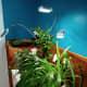Vogek Grow Light