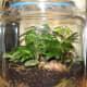 Woodland - 2 Gallon Glass Jar