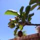 Remove dead fruit or partially eaten fruit.