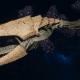 "Tyranid Light Cruiser - ""Bio Clutch Voidprowler"" - [Gorgon Sub-Faction]"