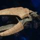 "Tyranid Light Cruiser - ""Corrosive Clutch Voidprowler"" - [Gorgon Sub-Faction]"