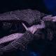 "Tyranid Light Cruiser - ""Corrosive Clutch Voidprowler"" - [Hydra Sub-Faction]"