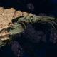 """Tyranid Light Cruiser - """"Corrosive Strangler Voidprowler"""" - [Gorgon Sub-Faction]"""