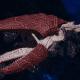 "Tyranid Light Cruiser - ""Corrosive Clutch Voidprowler"" - [Kraken Sub-Faction]"