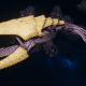 "Tyranid Light Cruiser - ""Bio Clutch Voidprowler"" - [Jormungandr Sub-Faction]"