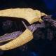 "Tyranid Light Cruiser - ""Corrosive Clutch Voidprowler"" - [Jormungandr Sub-Faction]"