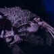 "Tyranid Light Cruiser - ""Bio Projectile Voidprowler"" - [Hydra Sub-Faction]"