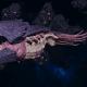 "Tyranid Battle Cruiser - ""Devourer"" - [Leviathan Sub-Faction]"