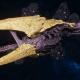 "Tyranid Battle Cruiser - ""Devourer"" - [Jormungandr Sub-Faction]"