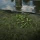 Milkweed (check the swamps of Leymone, but also grows anywhere there's water)